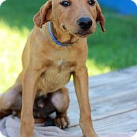 Adopt A Pet :: Finnigan - Waldorf, MD