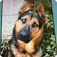 Adopt A Pet :: BIXBY VON BERGER - Los Angeles, CA