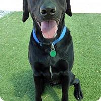 Adopt A Pet :: Buddy #11 - Purcellville, VA