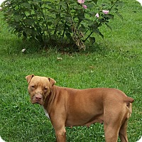 Adopt A Pet :: Archie - Freedom, PA