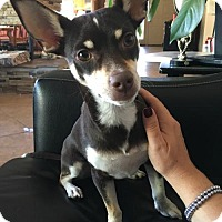 Adopt A Pet :: Melvin - Tucson, AZ