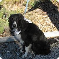 Adopt A Pet :: Jake - Providence, RI