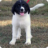 Adopt A Pet :: Jill/ADOPTED - parissipany, NJ