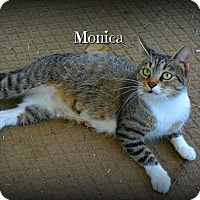 Adopt A Pet :: Monica - Granbury, TX