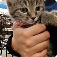 Adopt A Pet :: Magnum - Columbus, OH