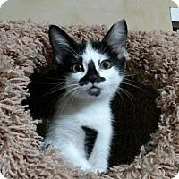 Adopt A Pet :: Aysha - Cincinnati, OH
