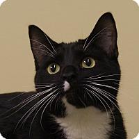 Adopt A Pet :: Lucky - Monroe, MI