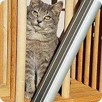 Adopt A Pet :: Tinker - Millersville, MD