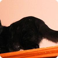 Adopt A Pet :: Rebecca - Morganton, NC