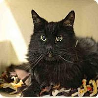 Adopt A Pet :: CHI CHI - Murray, UT