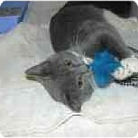Adopt A Pet :: Indy & Izzy - Arlington, VA