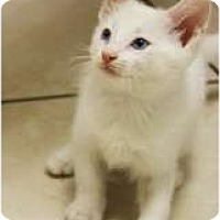 Adopt A Pet :: Sibling Reeboks, Nike & Adidas - Chicago, IL