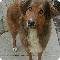 Adopt A Pet :: Romeo - Chicago, IL