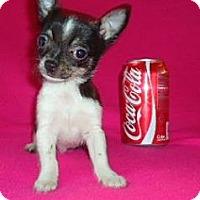 Adopt A Pet :: Mason - Staunton, VA