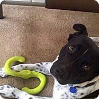 Adopt A Pet :: Shylo - Sacramento, CA