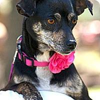 Adopt A Pet :: Audrey - San Antonio, TX