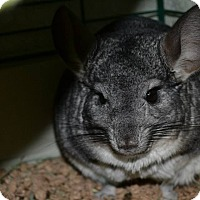 Adopt A Pet :: Popper - Patchogue, NY
