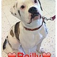 Adopt A Pet :: Reilly - Raritan, NJ