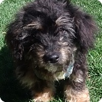Adopt A Pet :: Arley - Woodland, CA