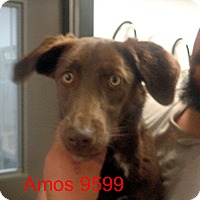 Adopt A Pet :: Amos - baltimore, MD