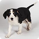 Adopt A Pet :: Wilma