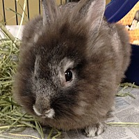 Other/Unknown Mix for adoption in Eatontown, New Jersey - Lots of Rabbits