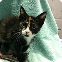 Adopt A Pet :: Gracie - Watkinsville, GA
