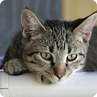 Adopt A Pet :: Seagrave - North Fort Myers, FL