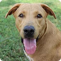 Adopt A Pet :: Lila - Brattleboro, VT