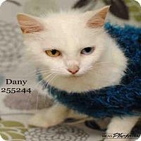 Adopt A Pet :: DANI - Conroe, TX