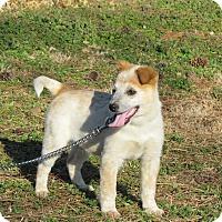 Adopt A Pet :: JESSIE - Hartford, CT