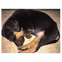 Adopt A Pet :: Poe - Austin, TX