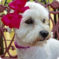 Adopt A Pet :: Penny Sue - Irvine, CA