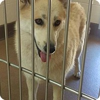 Adopt A Pet :: Nyla - Las Vegas, NV