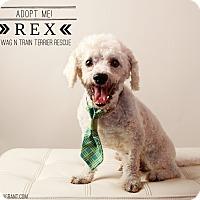 Adopt A Pet :: Rex - Omaha, NE