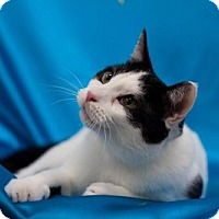 Adopt A Pet :: Greenville - Alexandria, VA