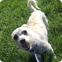 Adopt A Pet :: Kiki - Fort Collins, CO