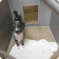 Adopt A Pet :: ID#A340849 - Petaluma, CA