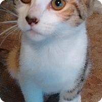 Adopt A Pet :: Gretel - Morganton, NC