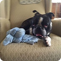 Adopt A Pet :: Mr Awesome! - Bennington, VT