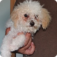 Adopt A Pet :: Tiny - Wheeling, WV
