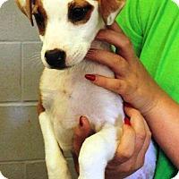 Adopt A Pet :: Darby - Oswego, IL