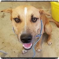Adopt A Pet :: Julian - Denver, CO