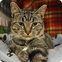 Adopt A Pet :: Becker - New Richmond,, WI