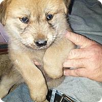 Adopt A Pet :: Samantha - Rocky Mount, NC