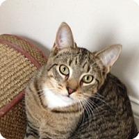 Adopt A Pet :: Brutus - Cincinnati, OH