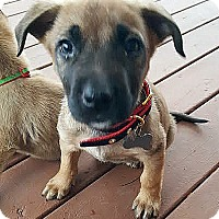 Adopt A Pet :: Tinsel-Adopted! - Detroit, MI