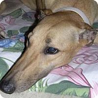 Adopt A Pet :: Goodie - Ashland City, TN