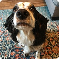 Adopt A Pet :: Emma - Courtesy Posting - Kannapolis, NC