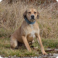Adopt A Pet :: Simon - Lebanon, MO